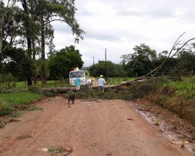 Árvores causam estragos na rede de energia elé...