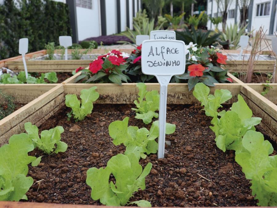 Alimentação e saúde: Cersul inaugura horto orgânico
